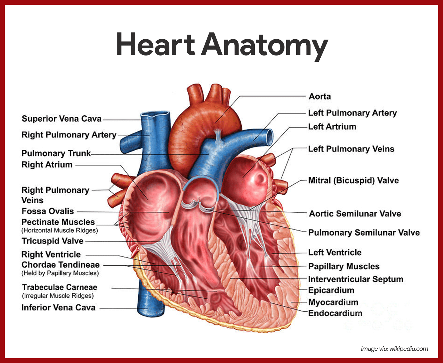 Human anatomy dissection guide pdf