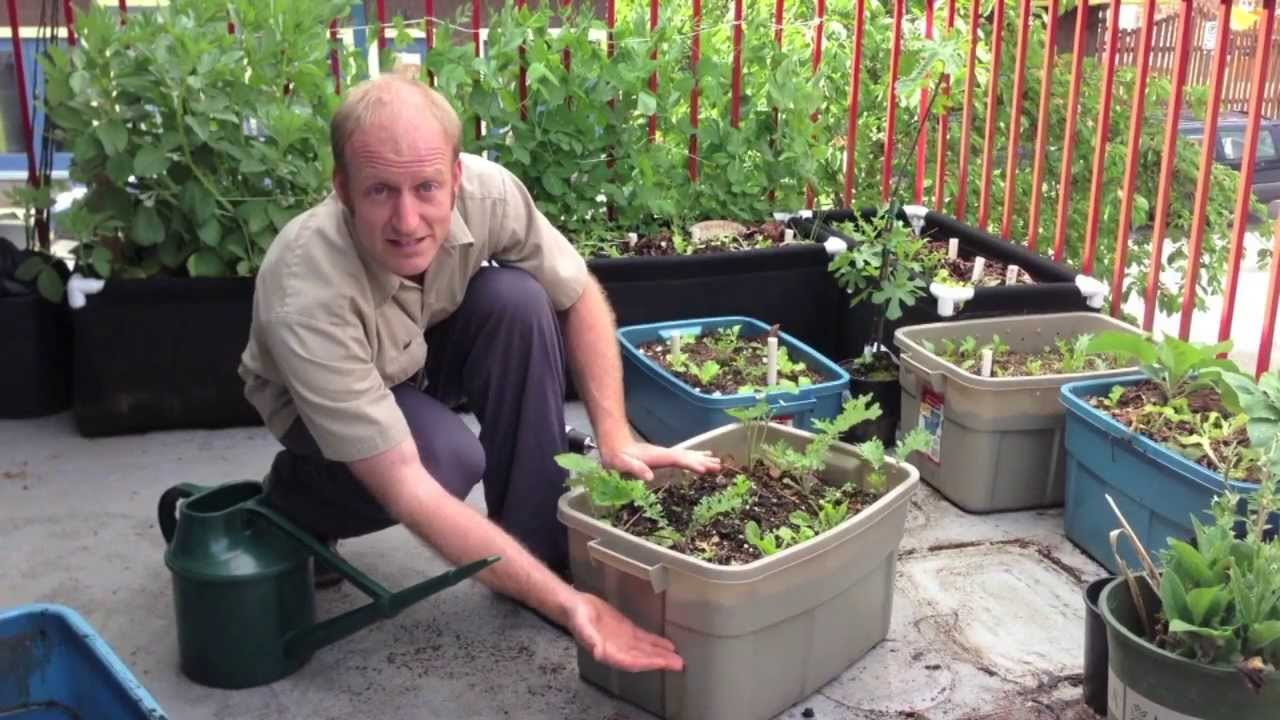wicking garden bed instructions